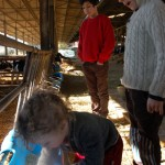 gita in fattoria